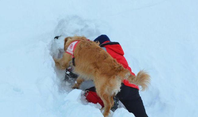 Mitglied der Südtiroler Rettungshundestaffel