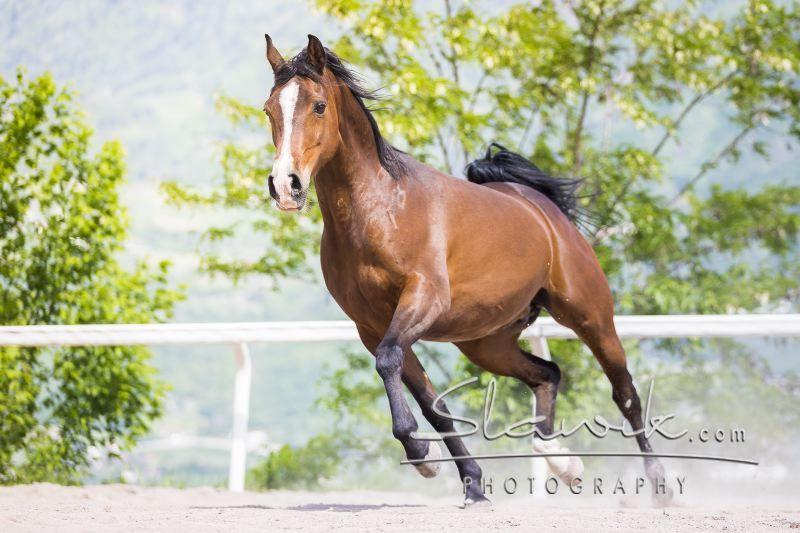 Cavalli veterinario alto adige a fi vicino bolzano for Cavalli bolzano