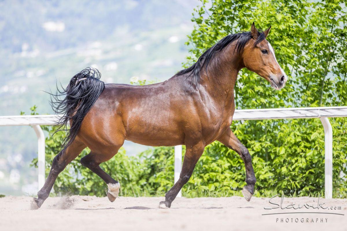 cavalli veterinario alto adige a fi vicino bolzano
